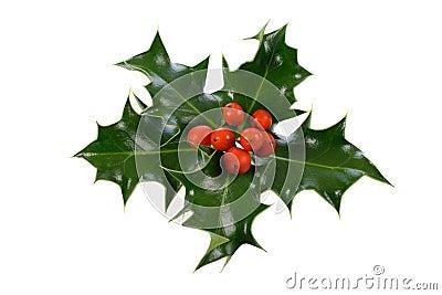 Ilex,holly, christmas decoration