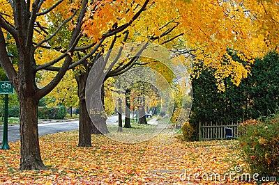 осень illinois