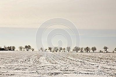 Illinois Winter Landscape
