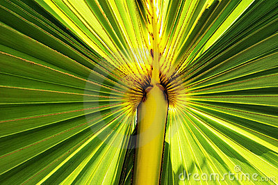 Illuminated Palm Leaf
