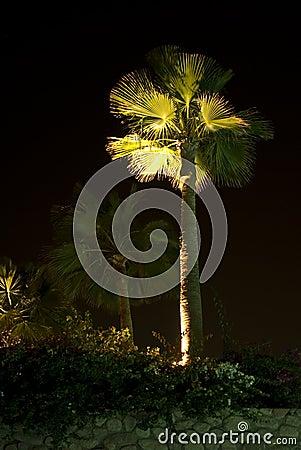 Illuminated palm tree