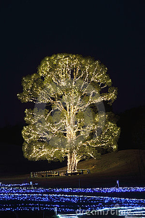 Illuminated tree