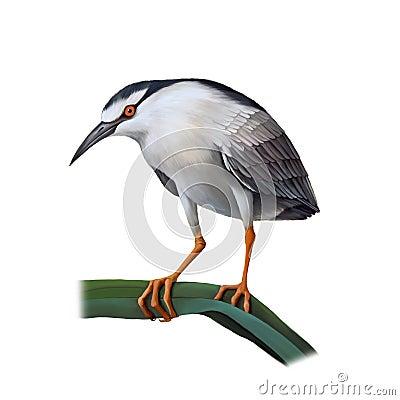 Free Illustartion Of Night Heron Bird Stock Images - 45854264