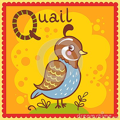 Illustrated alphabet letter Q and quail.