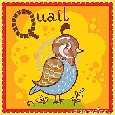 Illustrated alphabet letter Q and quail.
