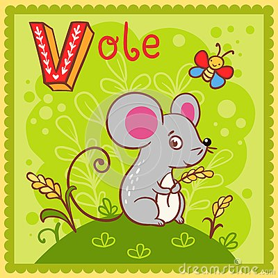 Illustrated alphabet letter V and vole.