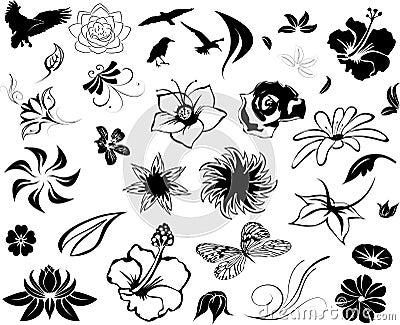 Illustrated Floral Designs
