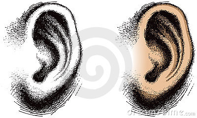 Illustrated Human Ear