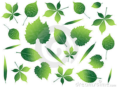 Illustrated leafs in many shapes