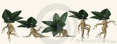Illustrated posing plant root