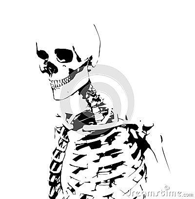 Illustrated Skeleton