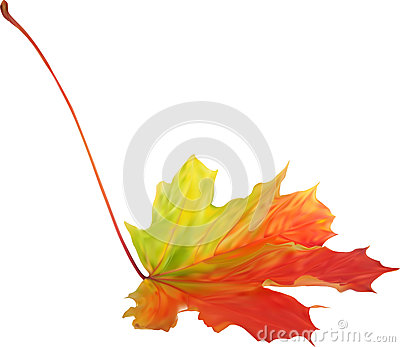 Illustration with autumn single maple leaf