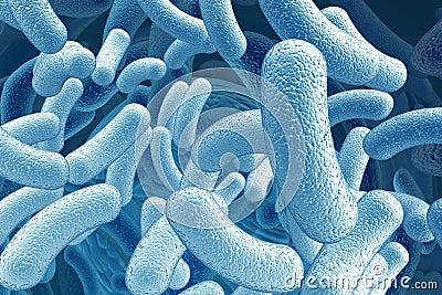 Illustration of bacillus microorganisms