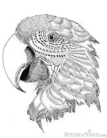 Illustration bird parrot