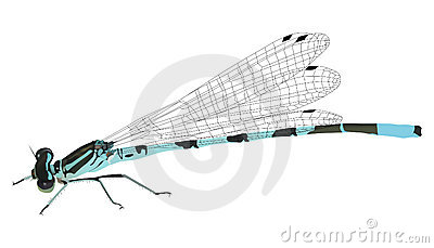 Illustration with blue dragonfly