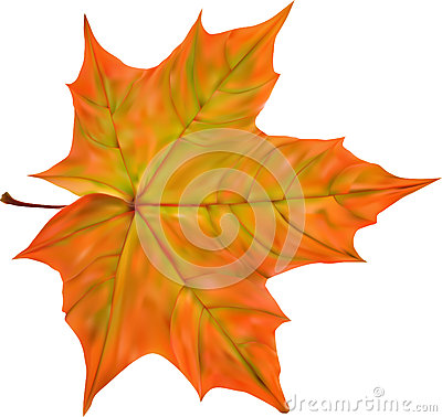 Illustration with bright autumn maple leaf