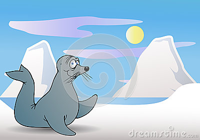 Seal on artic