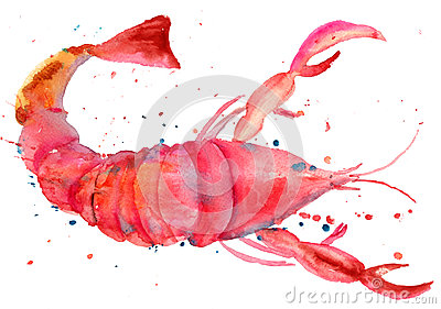 Illustration d aquarelle de langoustine