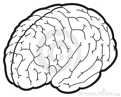 Illustration d un cerveau