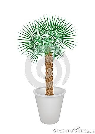 Illustration d 39 un palmier dans le pot de fleur photos for Palmier dans pot