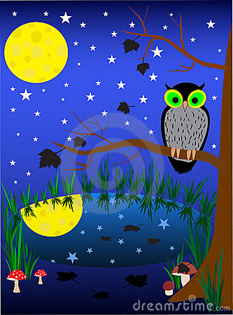 Illustration of dark night background. owl