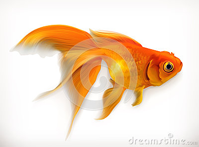 Illustration de vecteur de poisson rouge illustration de for Achat de poisson rouge
