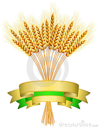 Illustration of ears of wheat