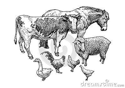 Illustration of farm animals Vector Illustration