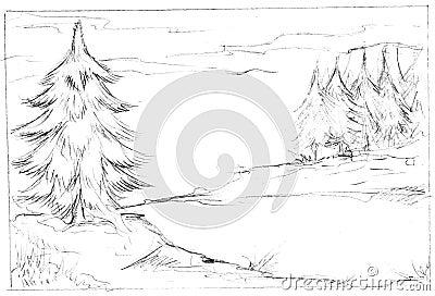 Illustration of fir trees