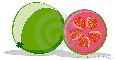 illustration of guava fruit