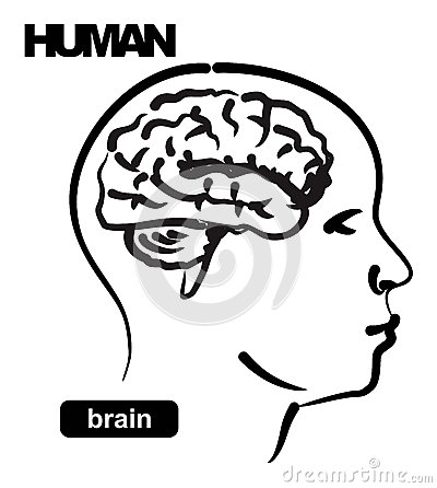 Illustration of human