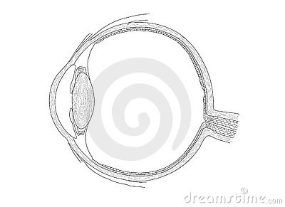 illustration of human eye - vector