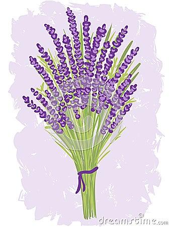 Illustration of lavender bouquet