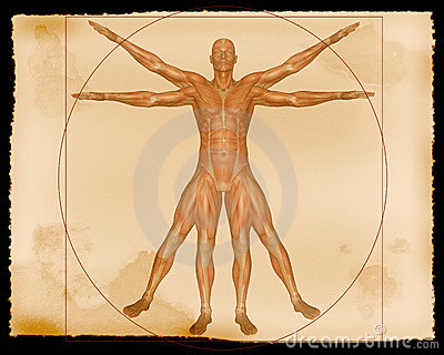 Illustration - Muscle Man
