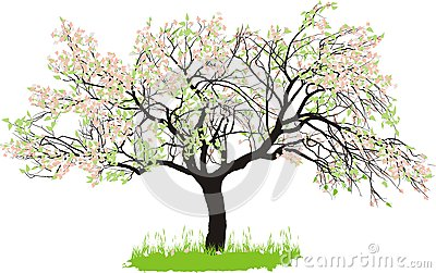 Apple tree in spring