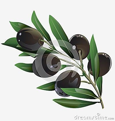 Illustration of an olive branch