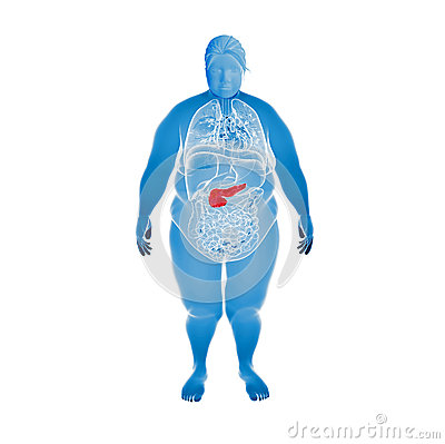 Illustration of the overweight female pancreas