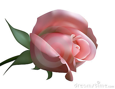 Illustration of pink roses (with mesh)