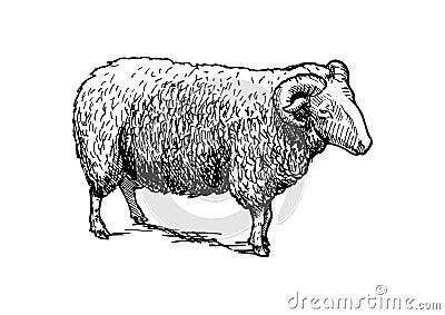 Illustration of ram Vector Illustration
