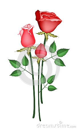 Illustration Red Roses Isolated on White Backgroun