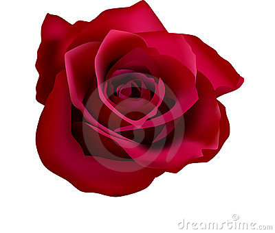 Illustration of red roses (with mesh)