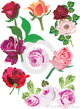 Illustration with rose collection