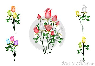 Illustration of Roses Bouquet Isolated on White Ba