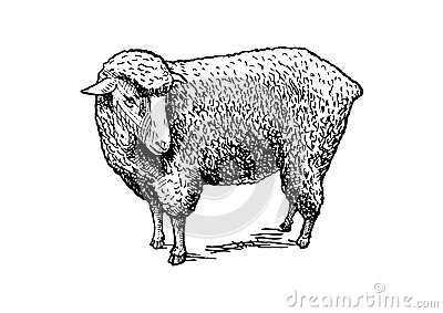 Illustration of sheep Vector Illustration