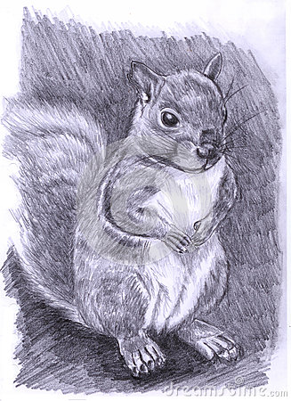 Illustration-Squirrel