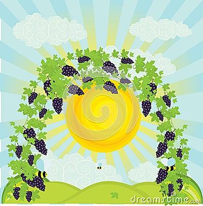 illustration of a vineyard