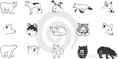Illustrations animales prédatrices