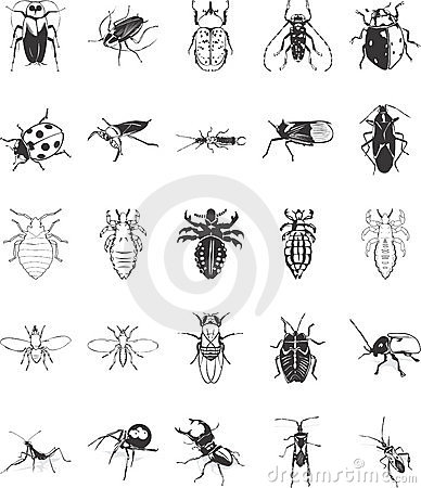 Illustrations of Bugs
