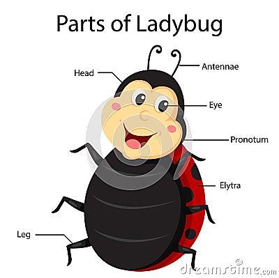 Mosquito Clipart