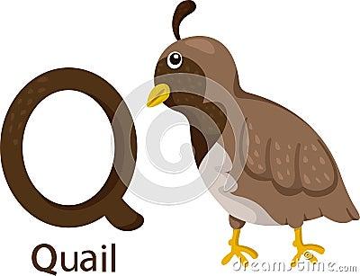 Quail Stock Illustrations  Quail Bird Clipart